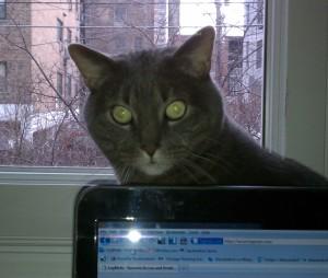 Cat peeking over laptop screen